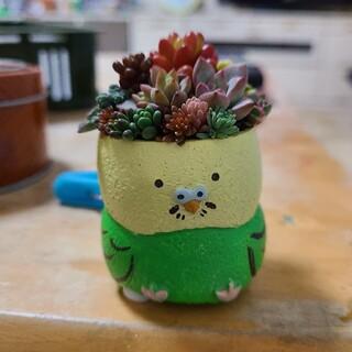 多肉植物 寄せ植え チマ寄せ 鳥鉢グリーン もりもり💪(プランター)