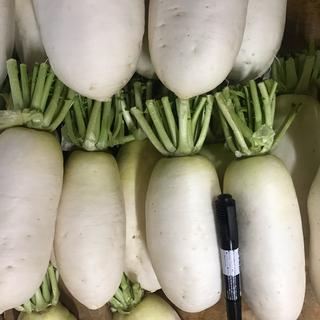 大根(野菜)