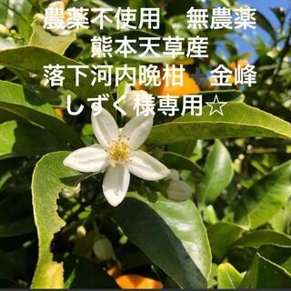 しずく様専用☆ 農薬不使用 無農薬 落下 河内晩柑5kg ➕金峰 みかん天草産(フルーツ)