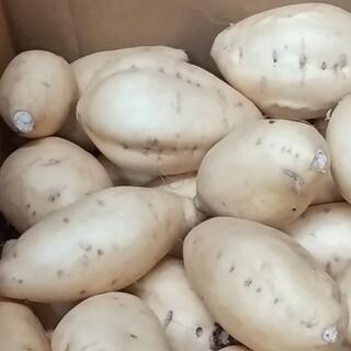 【みみ様専用】しろほろり、パープル AB 5キロ(野菜)