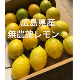 広島県産 無農薬 レモン 国産 レモン 産地直送 送料無料(フルーツ)