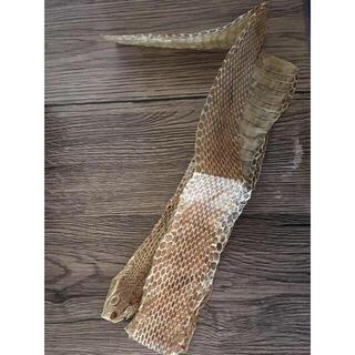 蛇の抜け殻 全身 縁起物 ヘビ(爬虫類/両生類用品)
