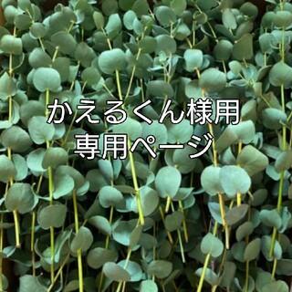 かえるくん様専用ページ☆ユーカリのドライフラワー(バラ売り)(ドライフラワー)