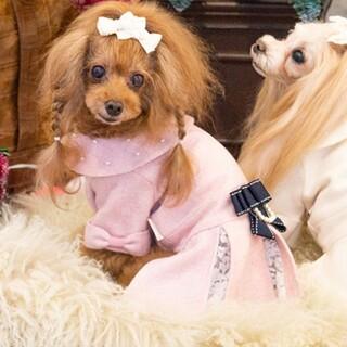 グラマーイズム コート ピンク パール レース パリス 犬服  ワンピース(犬)