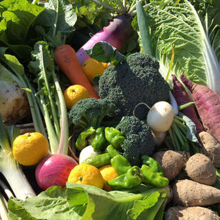 畑の野菜処分SALE 5kg C(野菜)
