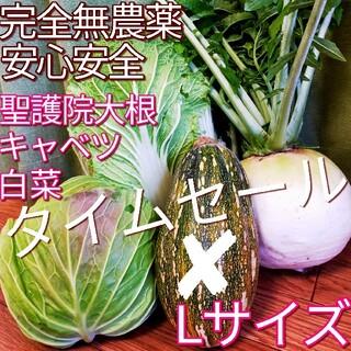 【農園直送】こだわり 野菜セット めちゃ美味しい 採れたて 新鮮 野菜詰め合  (野菜)