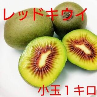 Marishka様専用 レッドキウイ2キロ(フルーツ)