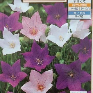 花の種      桔梗ミックス+アスター八重咲き(その他)