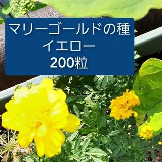 マリーゴールドの種 イエロー 200粒(その他)