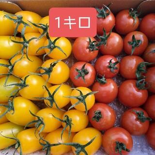 宮崎県産ミニトマト黄色と赤詰め合わせ(野菜)