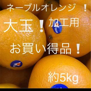 ネーブルオレンジ   大玉 加工用約5kg(フルーツ)