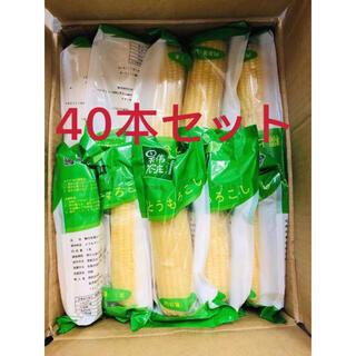 白糯とうもろこし軸付き  真空パック もち 白糯玉米棒 【40本入り・1ケース】(野菜)