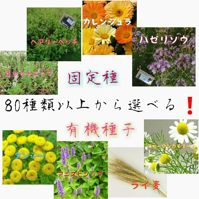 固定種 5点セット❗ 野菜の種 ハーブ 有機種子 家庭菜園 エディブルフラワー 食品/飲料/酒の食品(野菜)の商品写真