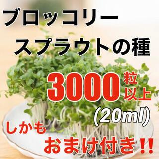 【安心の有機種子‼️】ブロッコリースプラウトの種 20ml オーガニック 種子(野菜)
