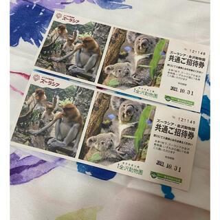 ズーラシア 金沢動物園 チケット(動物園)