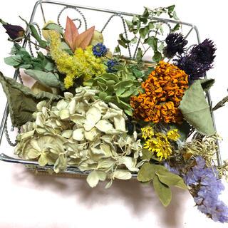 [新春セール]ナチュラルなドライフラワー 花材 素材 アンティーク T(ドライフラワー)
