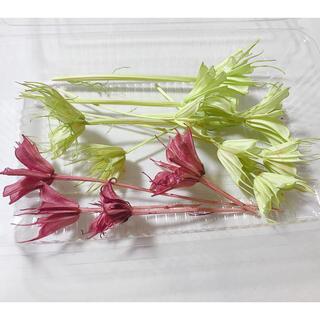 花材 ニゲラオリエンタリス グリーン レッド(ドライフラワー)