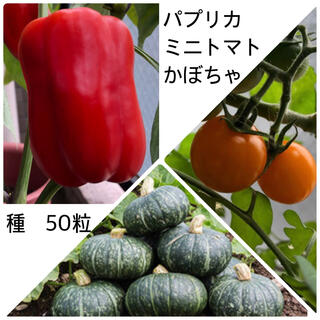 パプリカ ミニトマト かぼちゃ 種(野菜)