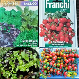 イタリア野菜の種 支柱いらずのミニトマト&12種類ミックスバジル プランターOK(その他)