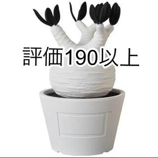 メディコムトイ(MEDICOM TOY)のVCD Pachypodium Gracilius ホワイト White(その他)