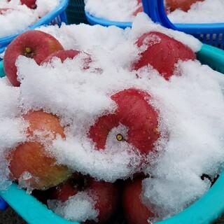雪室りんご サンふじ 家庭用5kg(フルーツ)