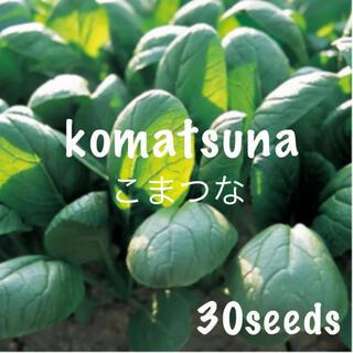 栄養満点! 小松菜 種30粒(野菜)