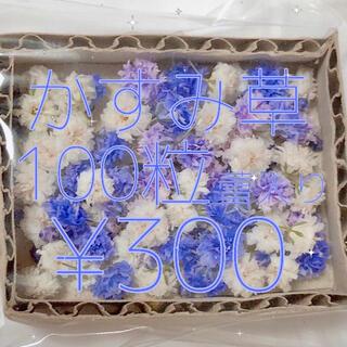 【残り1個】かすみ草 ドライフラワー パープル&ホワイトmix 蕾入り(ドライフラワー)