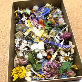 [訳あり品]花材増量パック 小花と花びらと葉と木の実 ドライフラワー V(ドライフラワー)