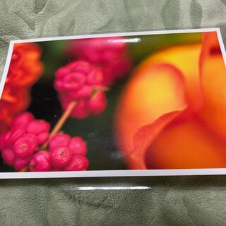 レッド オレンジ系 ポストカード 未使用新品非売品 ラフディップ正月特典(印刷物)