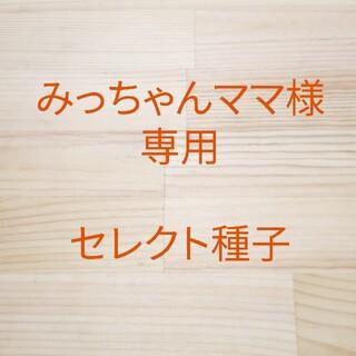 みっちゃんママ様専用 セレクト種子 4袋(野菜)