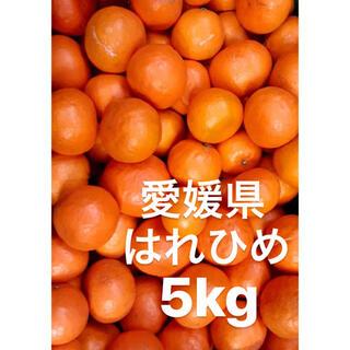 愛媛県 はれひめ 5kg(フルーツ)