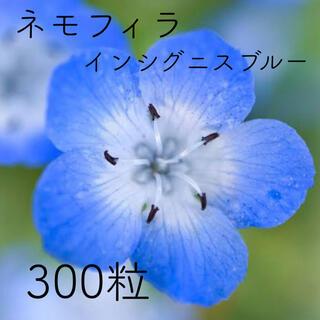 ネモフィラ【 インシグニスブルー 】* 300粒(その他)