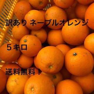 ネーブルオレンジ 5キロ 家庭用(フルーツ)