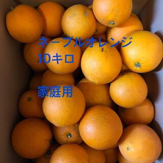 ネーブルオレンジ  家庭用 10kg(フルーツ)