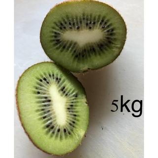 広島県産 無農薬 キウイフルーツ 5kg 小〜極小玉サイズ(フルーツ)
