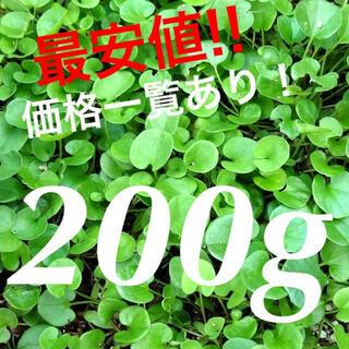【最安値】ダイカンドラ200g種子<14平米>  お洒落なグランドカバー♪♪(その他)