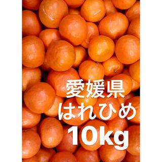 愛媛県 はれひめ 10kg(フルーツ)