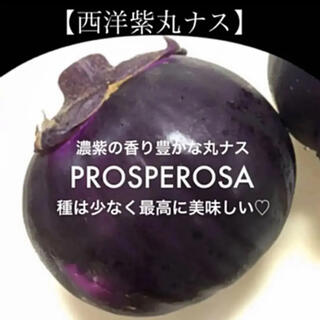 ◆西洋紫丸ナス PROSPEROSA  種子20粒(その他)