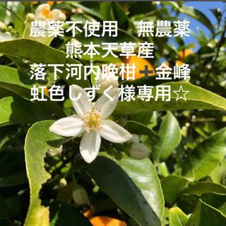 虹色しずく様専用☆農薬不使用 無農薬 落下 河内晩柑➕金峰  熊本天草産(フルーツ)