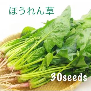 うめうめ様専用 ほうれん草 種30粒 紫からし菜50粒 小松菜30粒(野菜)