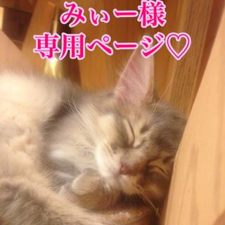 MISSHA - 【即購入可能】ミシャ ポケモンクッションファンデ