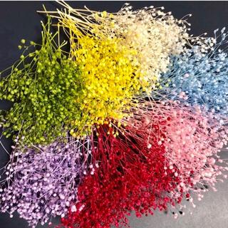 《SALE》かすみ草 7色セット プリザーブドフラワー ハーバリウム 花材(プリザーブドフラワー)