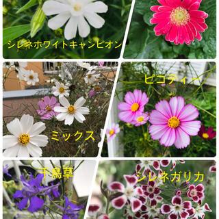 花の種6種類 各20粒 合計120粒(その他)