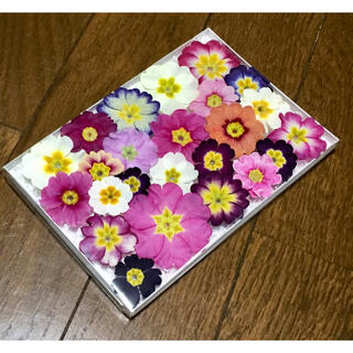f11  銀の紫陽花か作ったふんわり可愛いプリムラのドライフラワー(ドライフラワー)