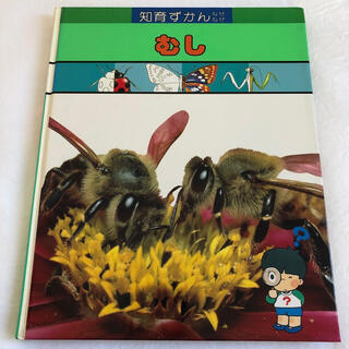 ガッケン(学研)の学研 図鑑 虫 知育ずかん(絵本/児童書)