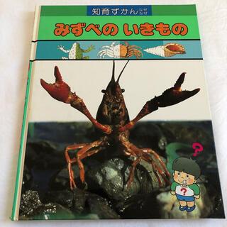ガッケン(学研)の学研 図鑑 水辺の生き物 知育ずかん(絵本/児童書)