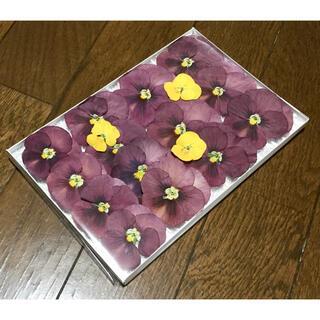 f⑦ 銀の紫陽花が作った大きめテラコッタ色のビオラのドライフラワー‼️(ドライフラワー)