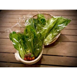 野菜ソムリエ推奨!鍋におすすめの野菜詰合せセット【香りと食味を楽しむ8品目】(野菜)