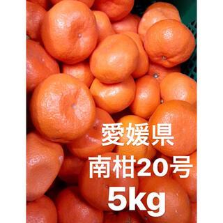 愛媛県 南柑20号 みかん 5kg(フルーツ)