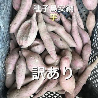 安納芋虫食い形が悪い10キロ(野菜)